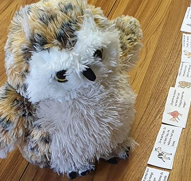 Mossy the owl working hard to learn new words.